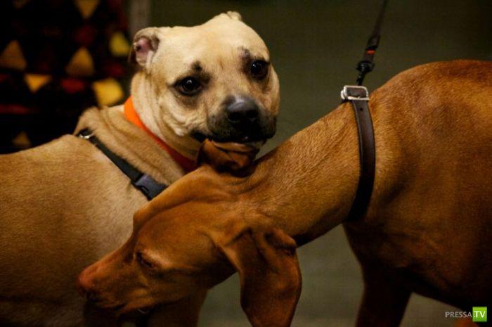 Ежегодный конкурс целования собачек в Портленде (7 фото)