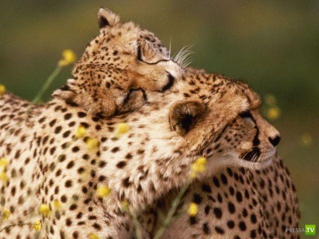 Милые и забавные зверюшки, часть 74 (47 фото)