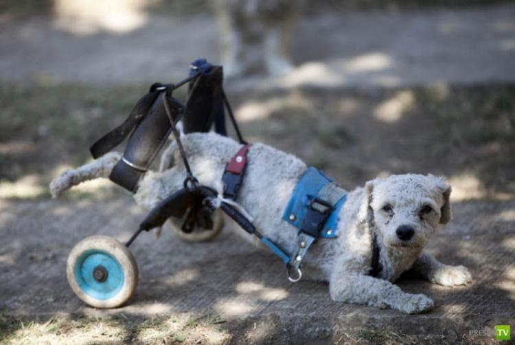 Собачий приют «Milagros Caninos» (« Собачьи чудеса») в Мехико (9 фото)