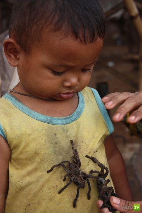 Камбоджийский деликатес - пауки! (15 фото)