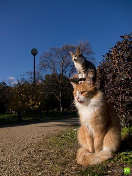Забавные животные, часть 4 (50 фото)