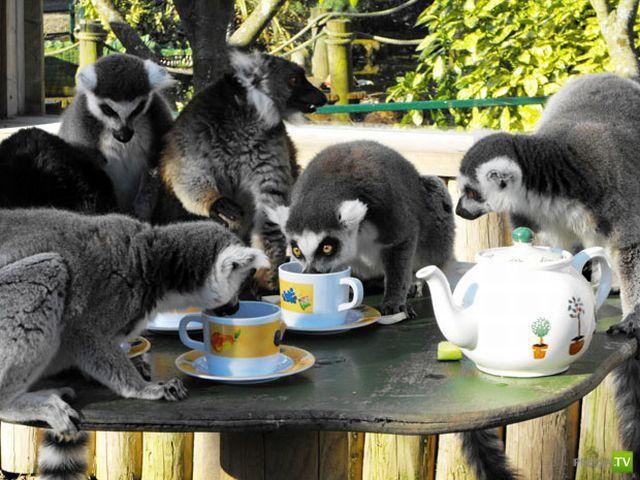 Новейшая подборка милых и забавных животных (45 фото)