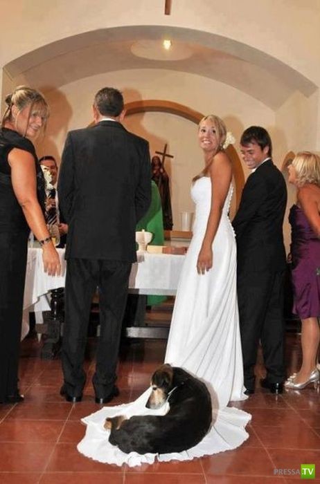 Фотоподборка свадебных приколов (53 фото)