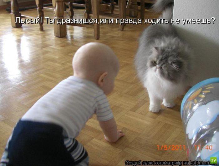 Уморительные котоматрицы (50 фото)
