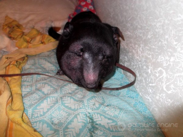 Ошейник-удавка для Фили... (4 фото)