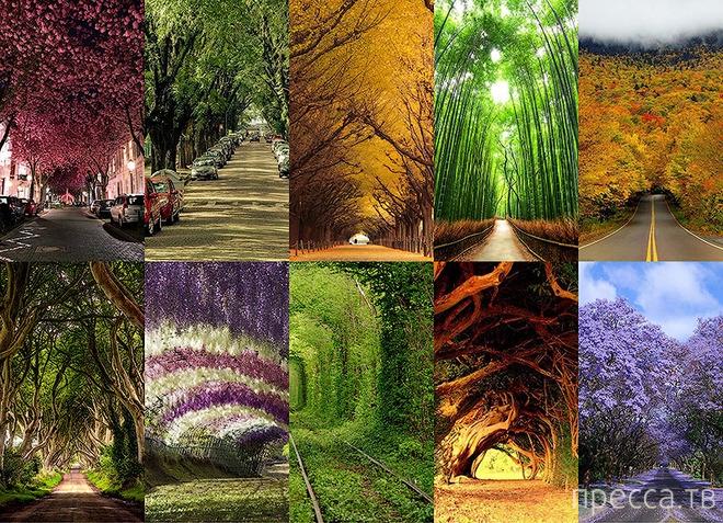 Самые красивые в мире тоннели из деревьев (11 фото)