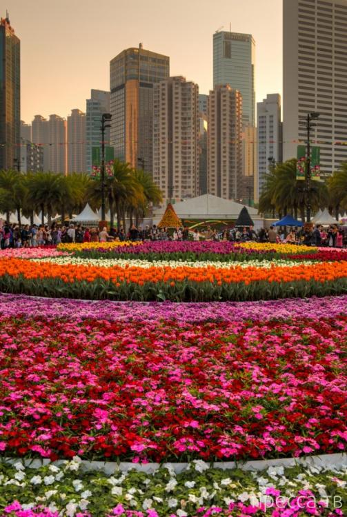 Фестиваль цветов в Гонконге «Hong Kong Flower Show 2013» (31 фото)