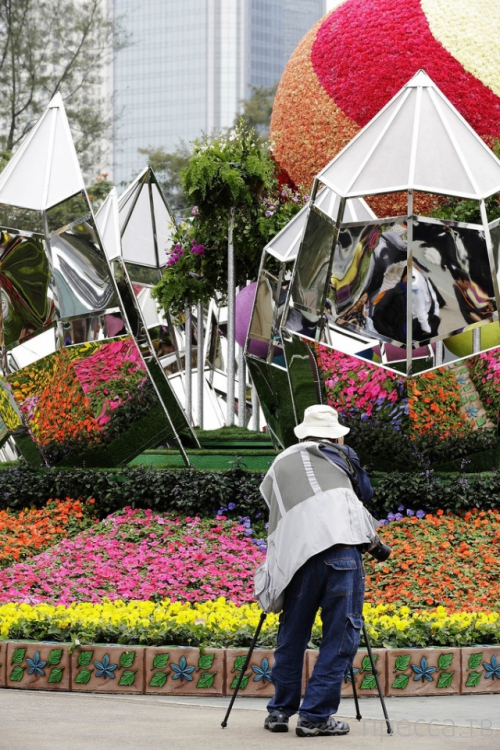 Фестиваль цветов в Гонконге «Hong Kong Flower Show 2013» (31 фото)