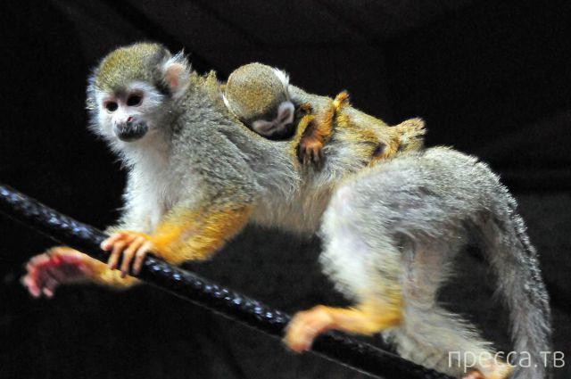 Забавные животные, часть 15 (47 фото)