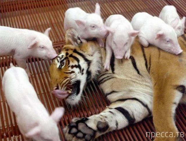 Утренний позитив - забавные животные, часть 2 (55 фото)