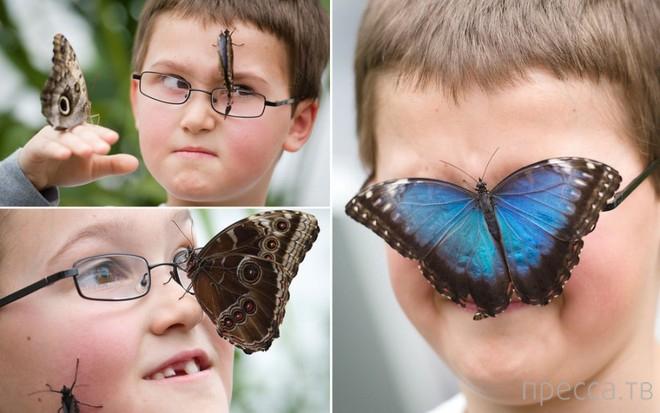"""Выставка """"Поразительные бабочки"""" в Лондоне (9 фото)"""