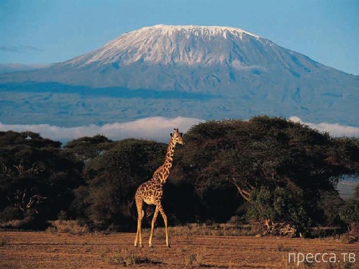 Интересно и красочно о Килиманджаро - самой высокой горе Африки (15 фото)