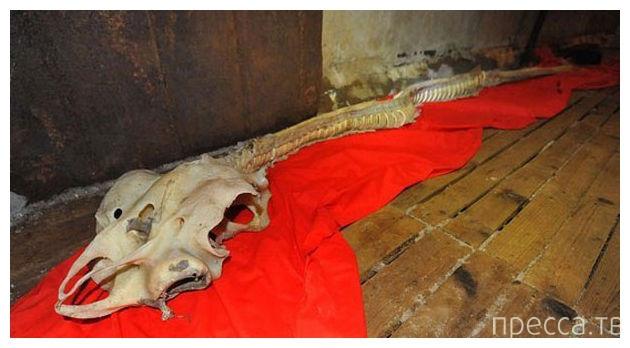 Китайский рыбак выловил скелет дракона (фото + видео)