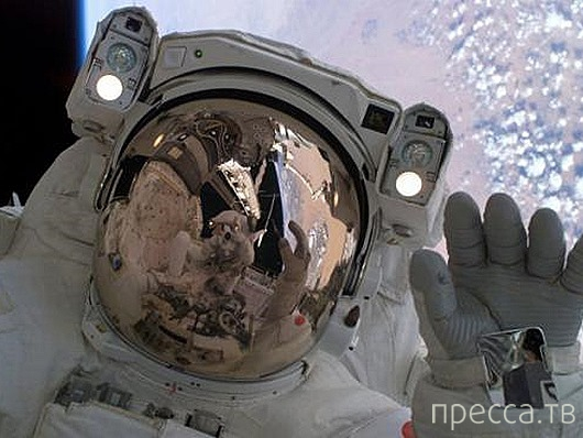 Кто годится в космонавты? (11 фото)
