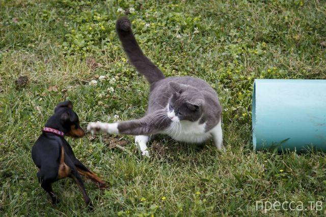 Заряд позитива - забавные животные, часть 8 (53 фото)