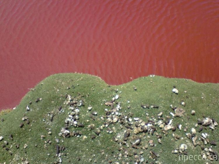Чили. Озеро Красная Лагуна (8 фото)