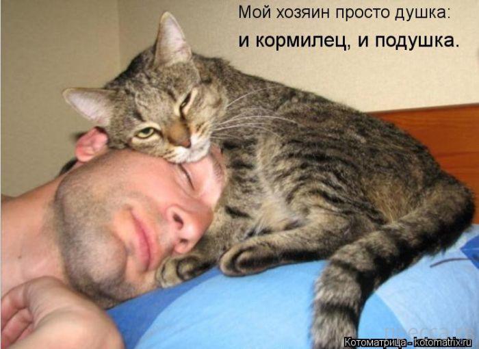 Смешные котоматрицы (44 фото)