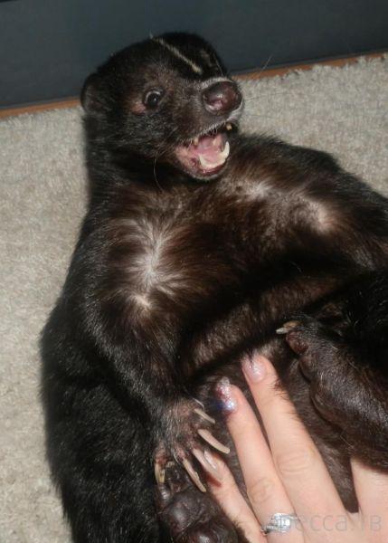Заряд позитива - забавные животные, часть 14 (52 фото)