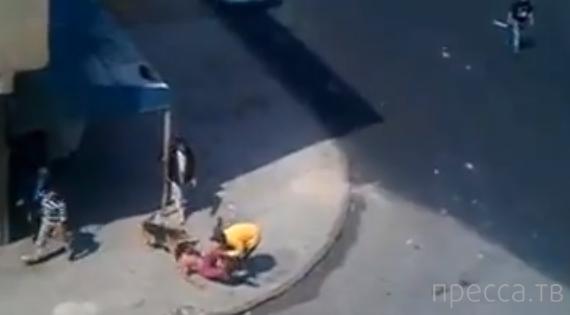 Закидал собак и их хозяина камнями... Касабланка, Марокко