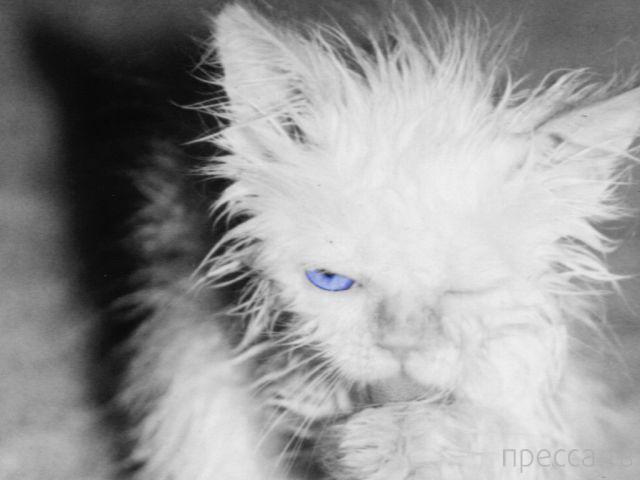 Заряд позитива - забавные животные, часть 17 (43 фото)