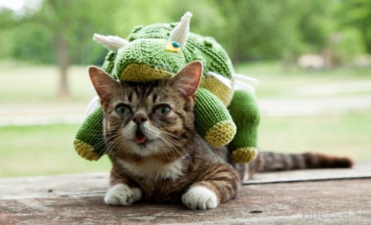 Lil Bub -  самый симпатичный кот в мире (6 фото)