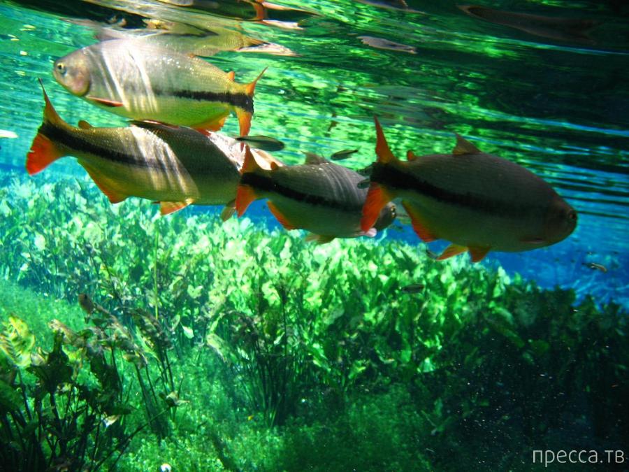 Бонито (Bonito) - хрустальные воды Бразилии (14 фото)