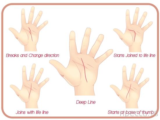 Хиромантия для всех... Как читать линии на руках (7 фото)