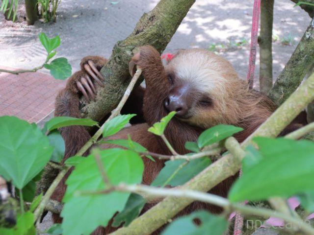 Заряд позитива - забавные животные, часть 23 (45 фото)
