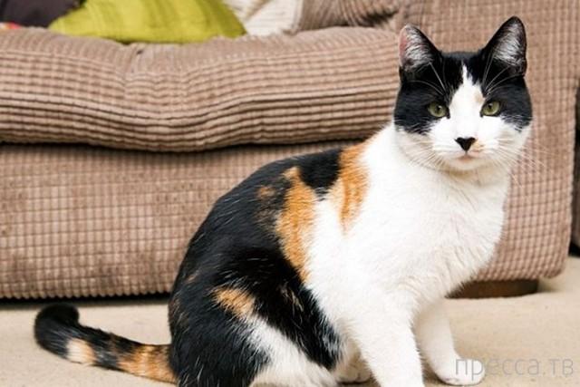 Необычный кот из Великобритании по кличке Джейк (3 фото)