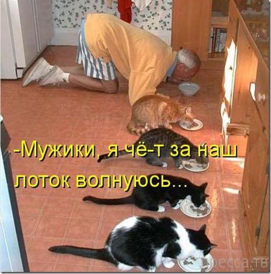 Смешные котоматрицы, часть 3 (44 фото)