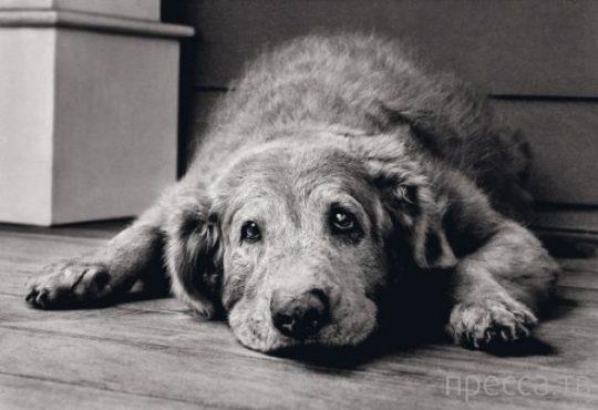 Ошибочные факты  о животных (10 фото)