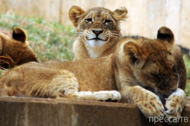 Заряд позитива - забавные животные, часть 32 (43 фото)