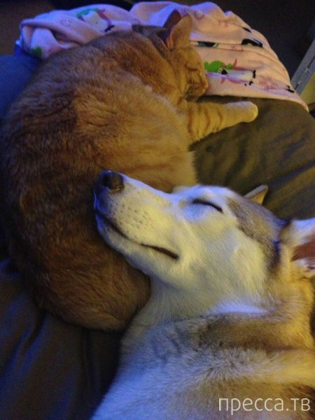Заряд позитива - забавные животные, часть 34 (53 фото)