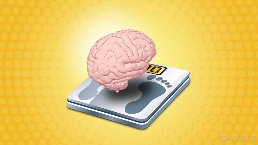 Чтобы похудеть, сфокусируйтесь на мозге, а не на диете