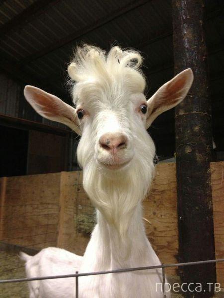 Заряд позитива - забавные животные, часть 39 (52 фото)