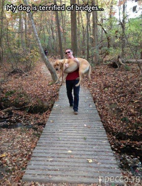 Прикольные фотографии с собаками (27 фото)