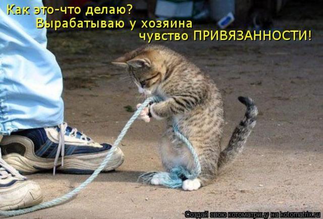 Смешные котоматрицы, часть 5 (19 фото)