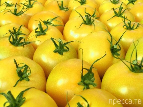 Интересное о помидорах...