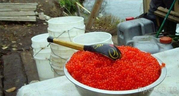 Достоинства и недостатки жизни на Магадане ... (15 фото)