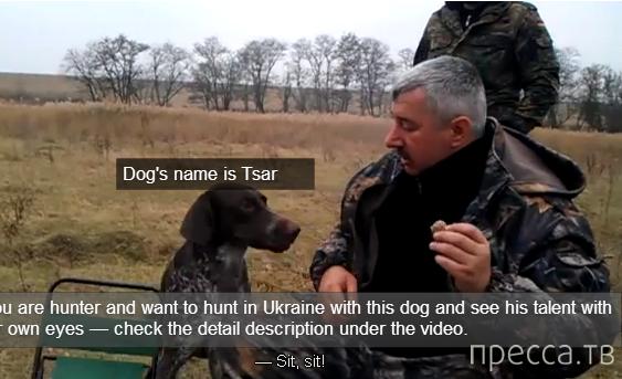 Собака - настоящий друг (видео)