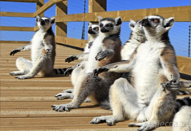 Заряд позитива - забавные животные, часть 44 (44 фото)