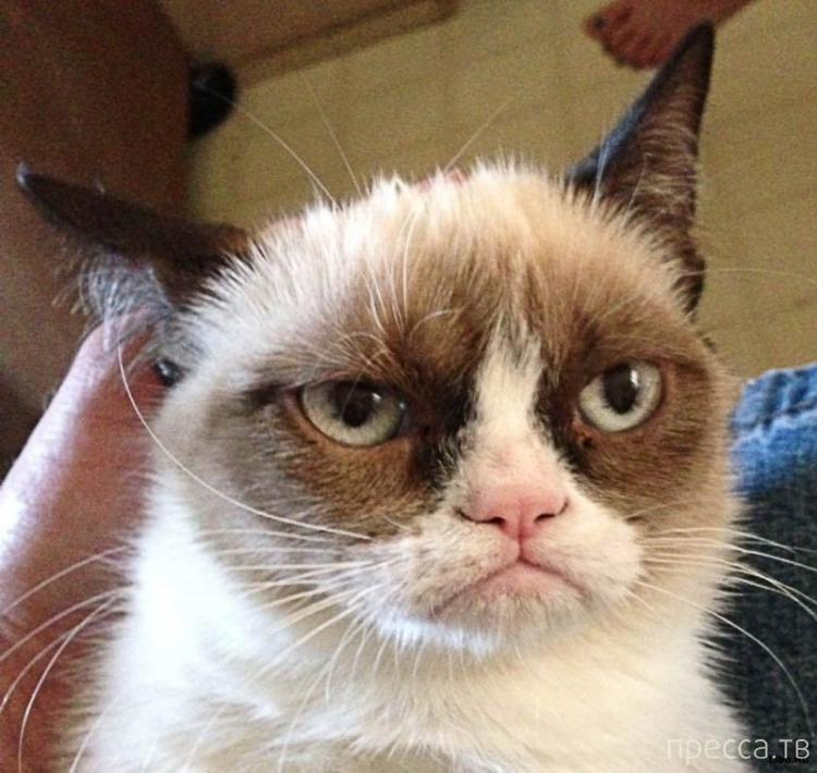 Самые известные коты интернета (6 фото)