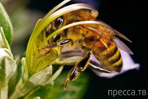 Что делать при укусах пчел, шмелей или ос: советы...