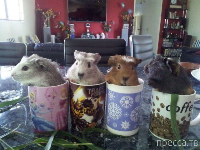 Заряд позитива - забавные животные, часть 46 (52 фото)