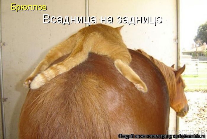 Смешные котоматрицы, часть 6 (29 фото)