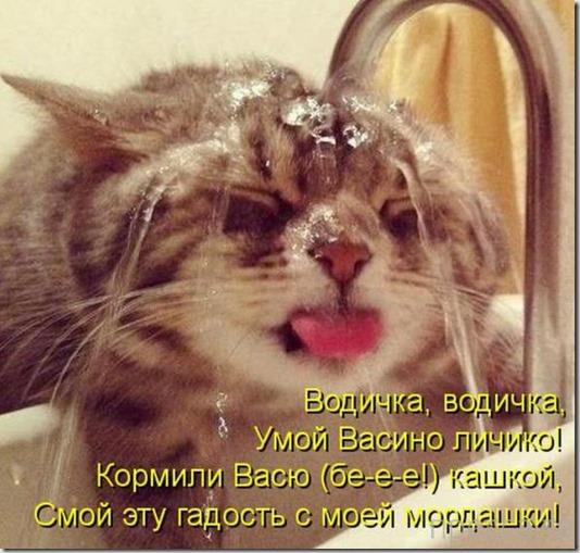 Прикольные котоматрицы, часть 11 (34 фото)