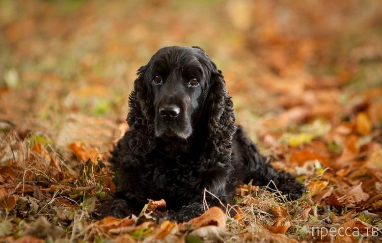 Топ 10: Самые агрессивные породы собак (11 фото)