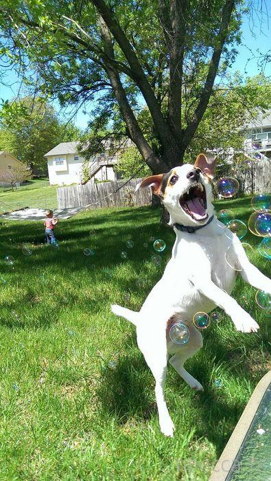 Заряд позитива - забавные животные, часть 50 (31 фото)