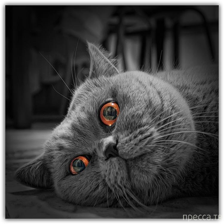 Почему надо завести дома кошку...