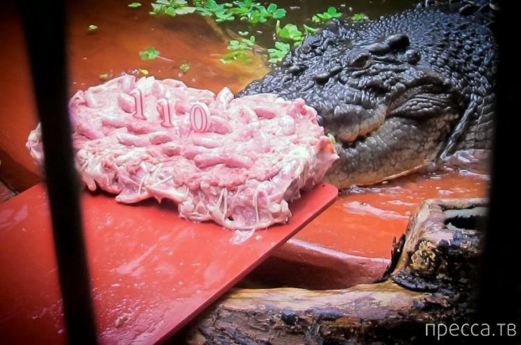 Самый большой крокодил в мире живет в Австралии (8 фото)